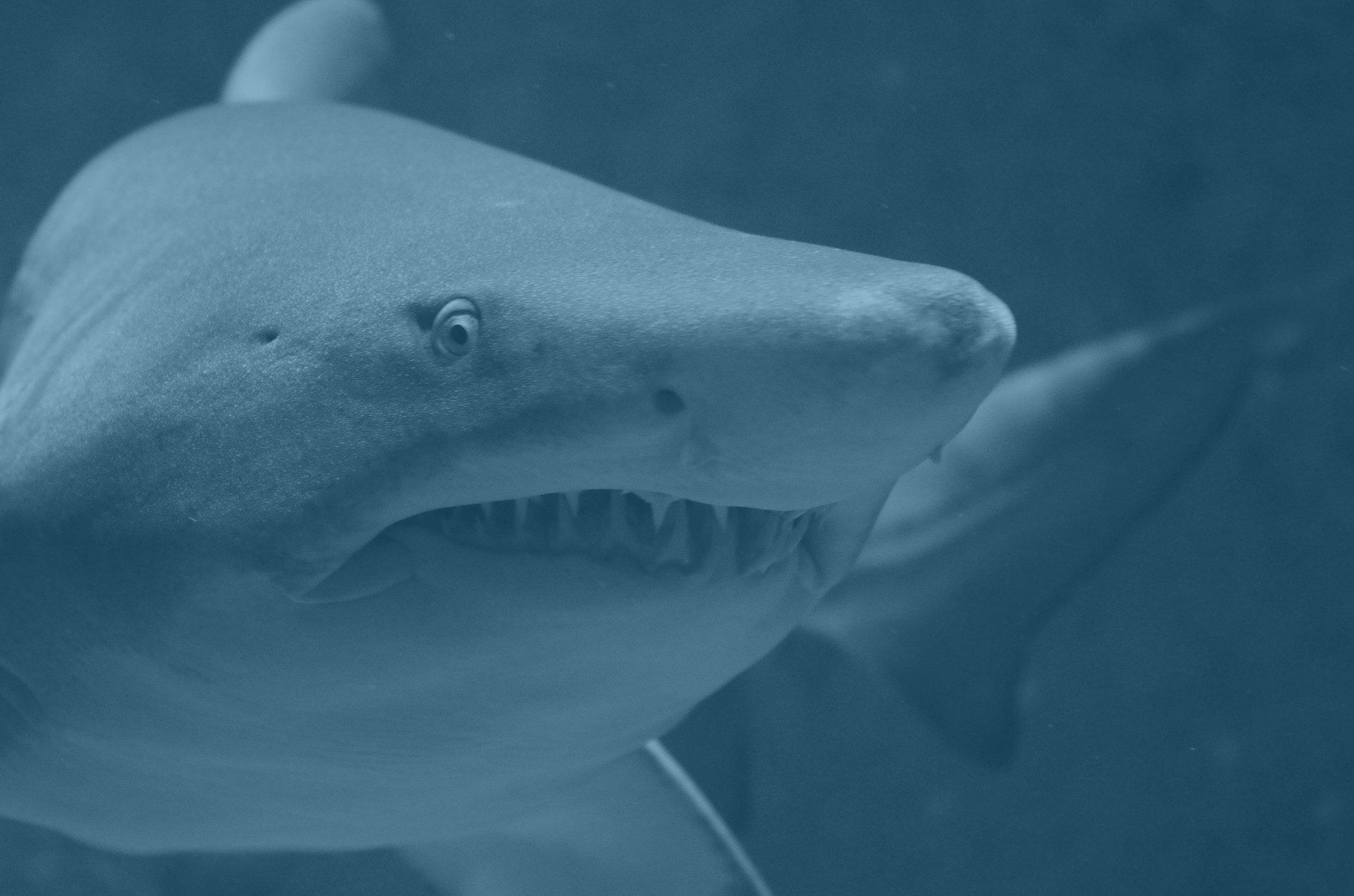close up of smiling shark eyes and teeth
