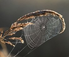 A finely woven web of laws will catch a copyist.